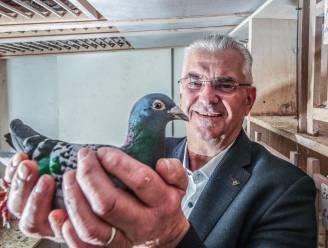 """Duivenmelker Joël verliest 35 duiven na één vlucht: """"Een groot mysterie"""""""