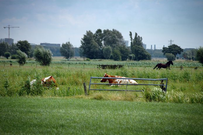 De polder Rijnenburg ten zuidwesten van Utrecht, die Utrecht de komende vijftien jaar wil benutten om energie op te wekken met zon én wind.