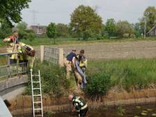 Brandweer Hasselt redt ree van verdrinkingsdood