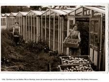 Toen de glastuinbouw in Helenaveen nog floreerde...