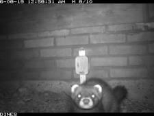 Winterswijkers gaan wild 'schieten' in eigen achtertuin