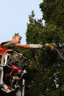 Pechvogel met hoogwerker uit boom gered in Schijndel