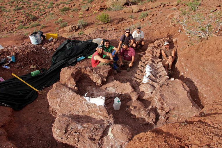 De in Patagonië gevonden fossielen zijn 98 miljoen oud en behoren mogelijk toe aan de grootste dinosaurus die ooit bestond. Beeld AFP