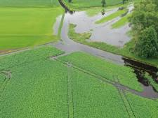 Aardappelen rotten op Soerendonkse akkers na overstroming Buulder Aa; 'Water kon geen kant op'