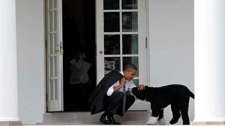 Toenmalig president Barack Obama aait hond Bo in 2012. Beeld AP