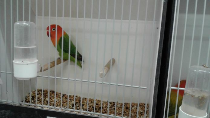 Tentoonstelling Vogelvriend in 't Patronaat in Nieuwkuijk