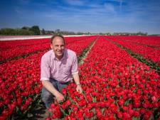 Ondanks het weer snel kleurrijke tulpenvelden? 'De tulpen staan half april gewoon in de bloei'