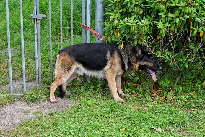 De hond van het slachtoffer werd vastgebonden aan een hek en is meegenomen door de Dierenambulance.