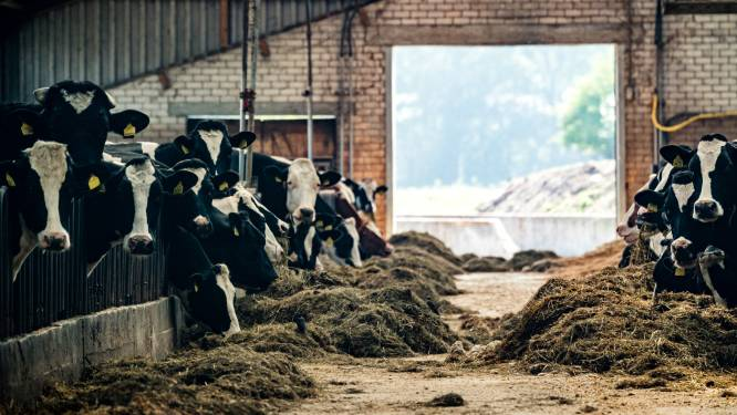 Onrust over uitgelekt plan om boeren te onteigenen in Berkelland