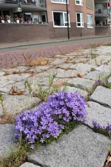 In de stad groeien bloemen en planten die nergens anders gedijen