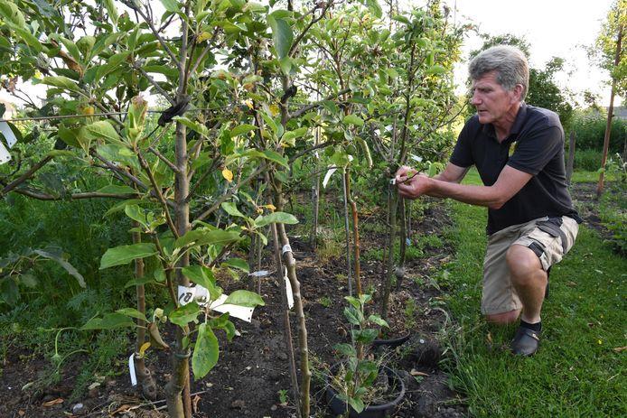 GILZE, Jan Stads / Pix4Profs Van West-Brabantse bodem, de Fruitboogerd, fruitbomen en klein fruit. Jos Dilven bij zijn perenbomen, elke witte label staat voor weer een nieuwe of oud verloren perensoort.