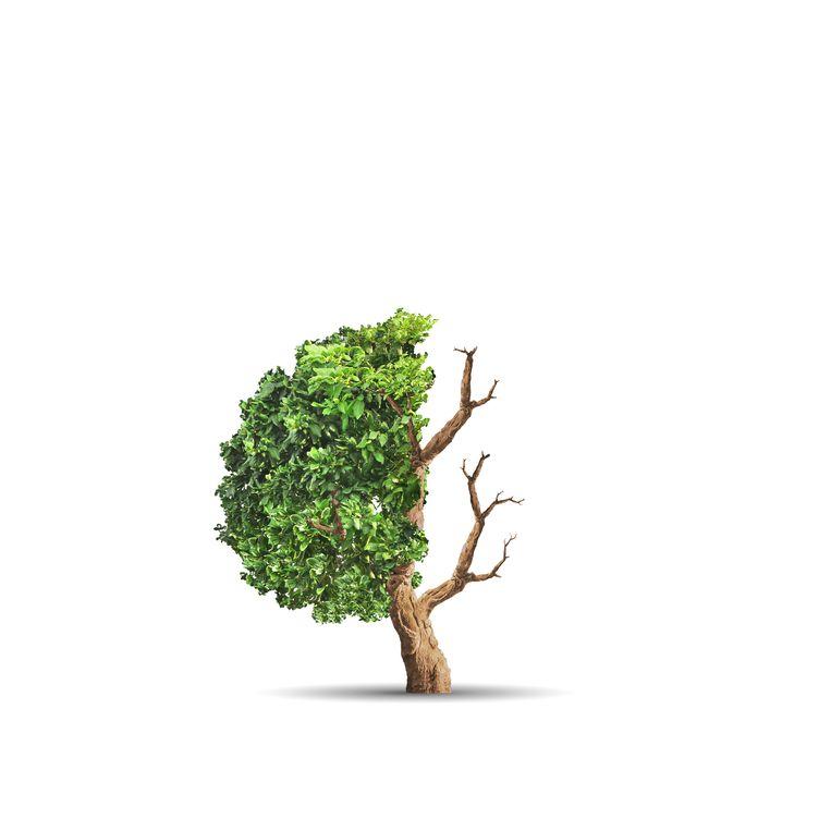 null Beeld Shutterstock