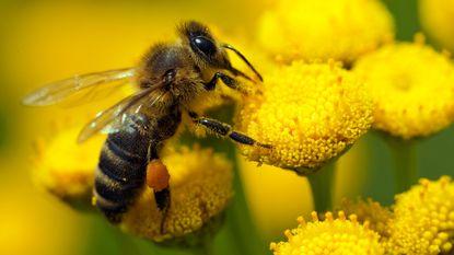 Groenen waarschuwen voor massale bijensterfte