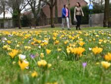 Symbool voor de ontluikende lente