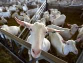 Tweede geitenstal Van der Schans op perceel in Rossum mag niet