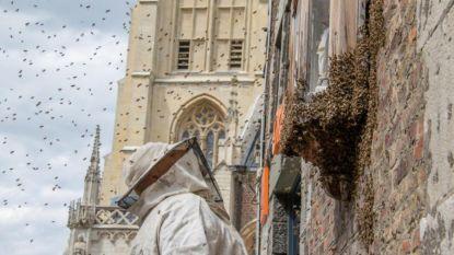 Brandweer jaagt bijenzwerm weg van kapelletje