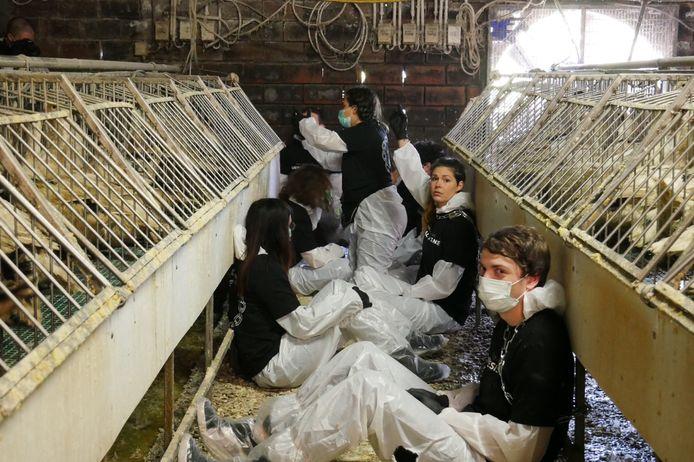 Dierenrechtenactivisten van Animal Resistance ketenden zich vast tussen de eendenkooien