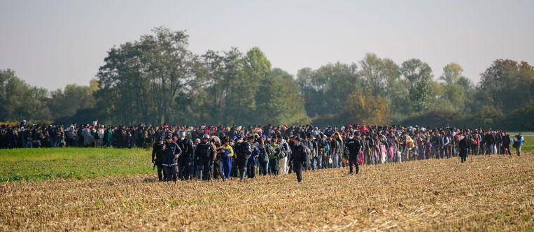Een stoet vluchtelingen beweegt zich onder politiebegeleiding voort op de grens tussen Kroatië en Slovenië. Beeld anp