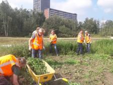 Bestuur Spoorpark zoekt groenvrijwilligers voor de zomer