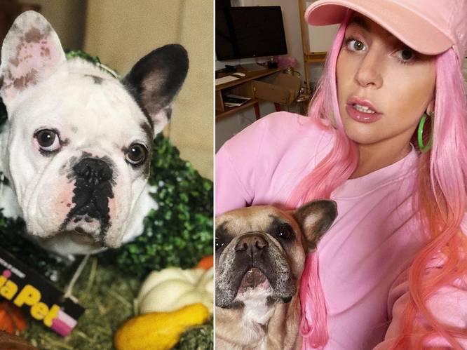 Heftige beelden van overval op hondenuitlater Gaga: 'Help, ik bloed uit mijn hart'
