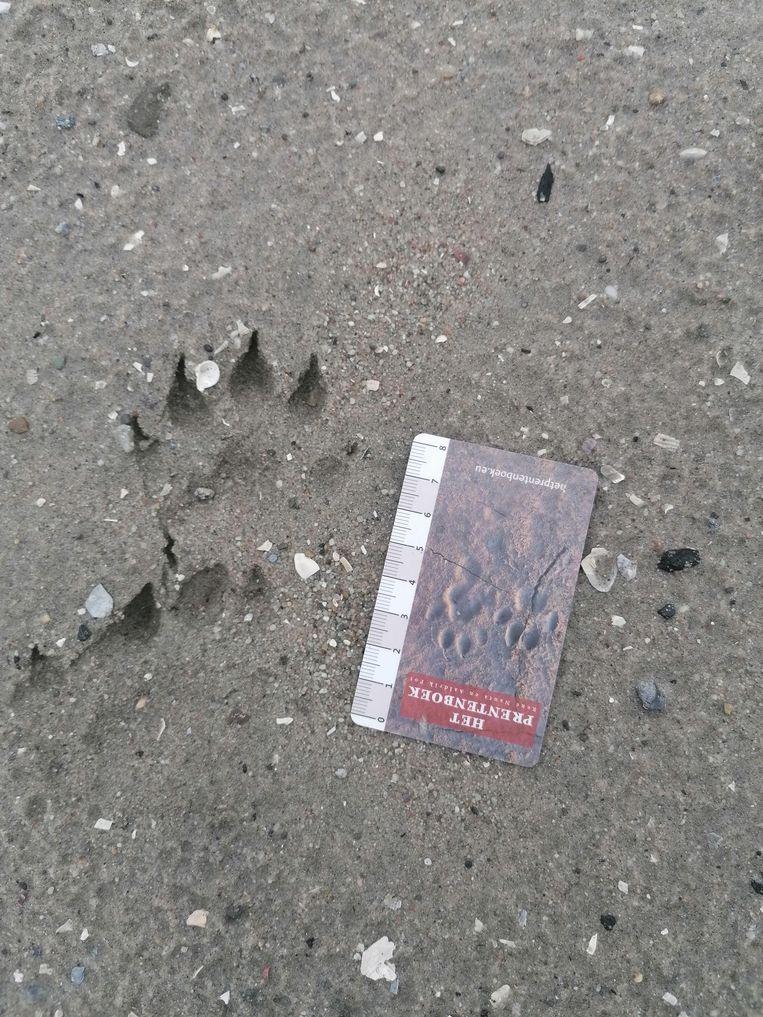 Op IJburg zijn sporen gevonden van een otter. Beeld Devi Jannink
