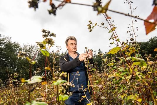 Marcel van Silfhout op zijn boekweitveld in Renkum. Hij heeft ook akkers in Wageningen en Bennekom en een pruimenboomgaard in de Betuwe.