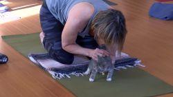Kittens zoeken baasje tijdens yogales