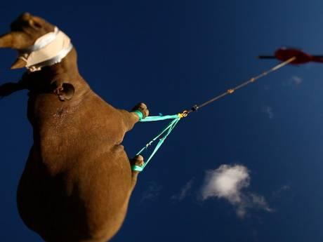 Orgasmes contre un nez bouché, rhinocéros à l'envers dans les airs: voici les prix Ig Nobel les plus originaux