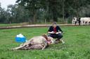 Een dierenarts start het sporenonderzoek.