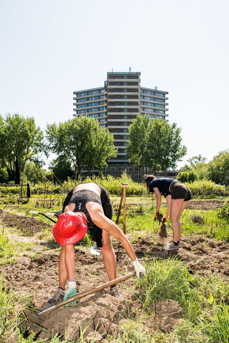 De Wageningen Student Farm, waar studenten op duurzame wijze gewassen kunnen telen. Beeld Jan Mulders