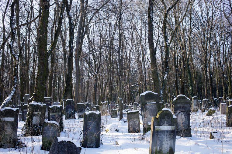 Op de Joodse begraafplaats liggen ongeveer 200 duizend mensen.  Beeld Piotr Malecki