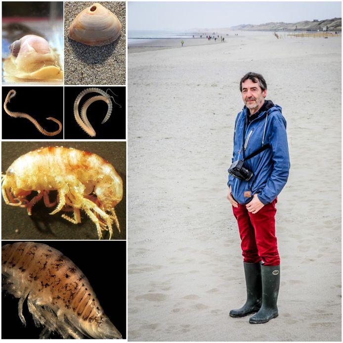 Francis Kerkhof op het strand. Hij vertelt over de 10 lieverds die je beter niet ontmoet op onze stranden of in de Noordzee.