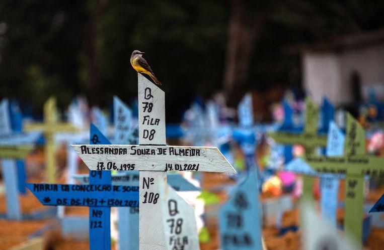 Een kerkhof vol coronadoden in Manaus, Brazilië. Beeld EPA