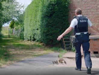 Bijzondere job: Oostendse politie escorteert jonge eendjes in 'Helden van Hier'