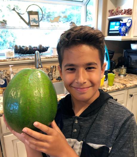 Gigantische avocado van familie uit Hawaii is de zwaarste van de wereld