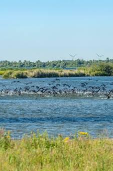 Breed front in Zuidwest-Nederland voor zoet Volkerak-Zoommeer