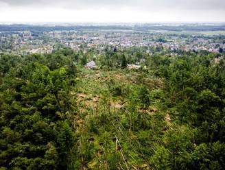 IN BEELD. Duizenden bomen omgewaaid bij noodweer in Nederlands dorp Leersum