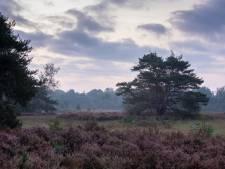 Roompot in de polder van Etten-Leur? 'Ja, denk eens out-of-the-box'