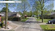 Gemeente laat 14 extra bomen in Kapelstraat en Veldstraat onderzoeken op houtrot