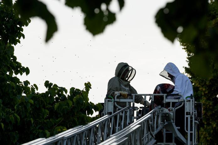 Brandweer komt eraan te pas om bijenzwerm te verwijderen.