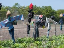 Leerlingen uit Heino beschermen schooltuin op Raalter bioboerderij met kleurrijke vogelverschrikkers