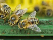 Ik was een bijenmoordenaar