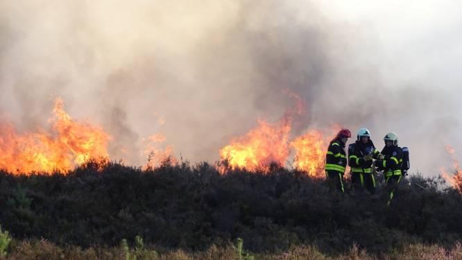 Alertheid bij camping 't Zand om flinke bosbrand in de buurt, vuur inmiddels geblust