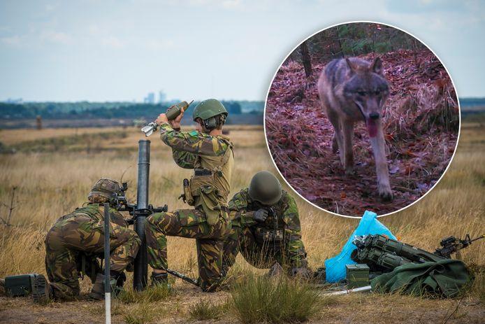 Hoe houdt Defensie er tijdens oefeningen rekening mee dat er een wolf op het schietterrein kan lopen?