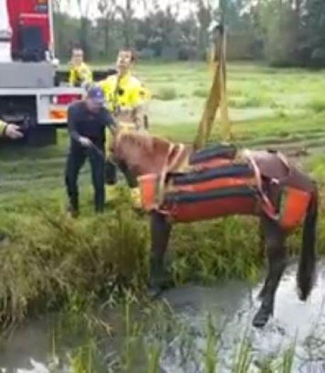 Brandweer redt paard dat muurvast zat in modder in Culemborg