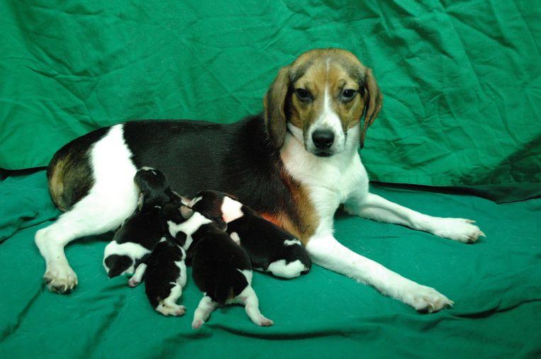 Een van de meest controversiële vragen luidt als volgt: 'Sarahs hond heeft vier puppy's. Ze kan enkel huizen vinden voor maar twee van hen, dus ze doodt de andere twee hondjes door een steen op hun hoofd'. De leerlingen kunnen onderaan aangeven in welke mate ze deze actie de juiste handelswijze vinden.