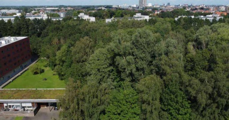 Het bosgebied aan de De Pintelaan. Beeld DM