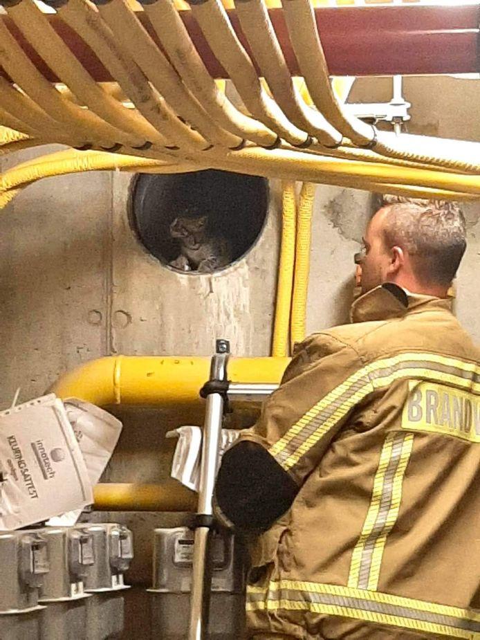 De brandweer kon het katje in veiligheid brengen