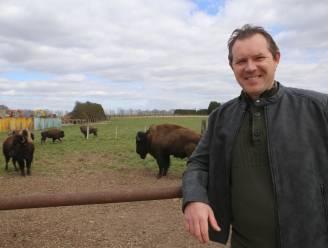 """Zaakvoerder Feestzalen Vogelzang organiseert nu ook uitjes met de huifkar naar... bizons: """"Opbrengst gaat naar de getroffenen van watersnood"""""""