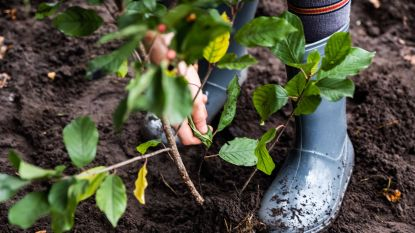 Wortegem-Petegem plant één extra boom per inwoner tegen 2024